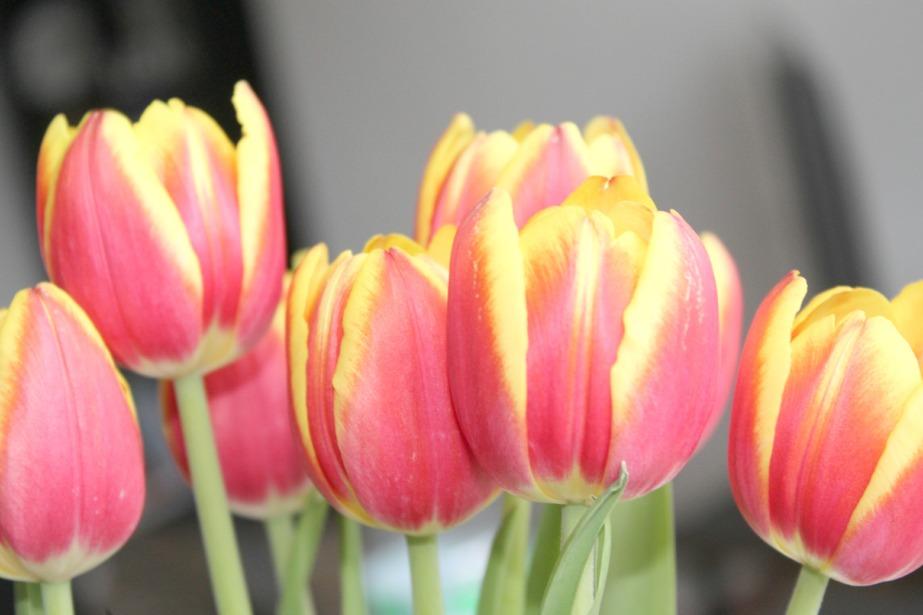 aprilfavs5